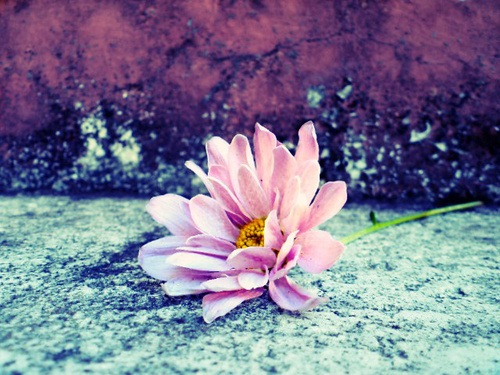 pink-flower-on-sidewalk